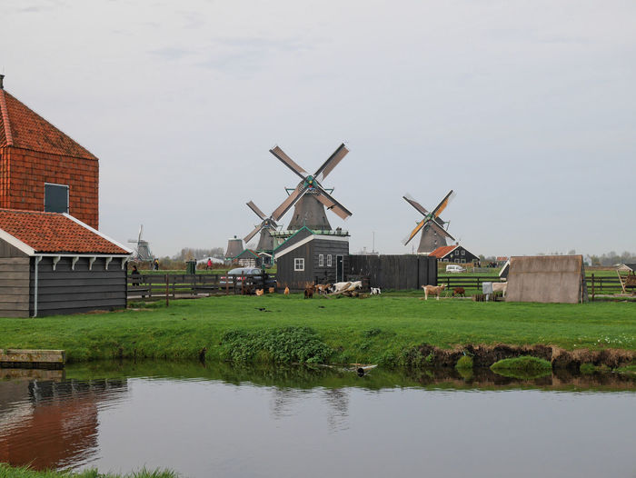- Zaanse Schans - Animals Architecture Built Structure Clear Sky Cloudy Exterior Farm Grass Green Landscape Landscape_Collection Outdoors Reflection Rural Scene Sky Tranquil Scene Travel Traveling Urban Urban Landscape Windmill Wood Ladyphotographerofthemonth How Do We Build The World? Landscapes With WhiteWall Your Ticket To Europe Been There.