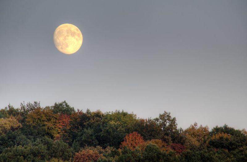 Autumn Autumn Colors Blue Clear Sky Fall Fall Colors Horizon Over Land Moon Nature Outdoors