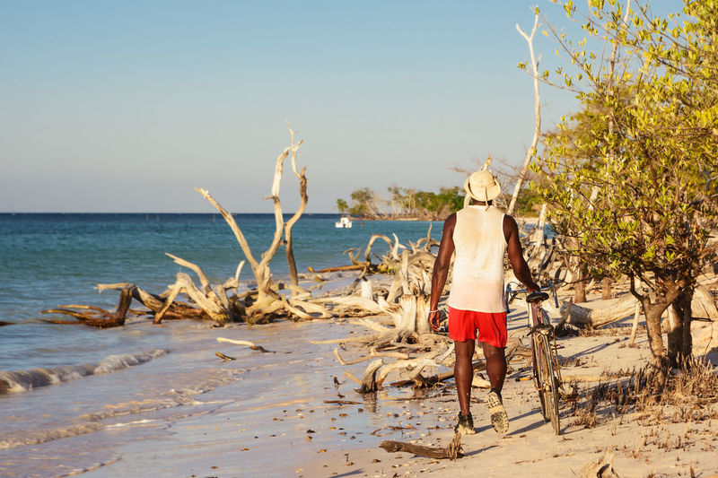 Cayo Jutias, Cuba - December 4, 2017: A Cuban-colored man walking alone at the beach with a bicycle in Cayo Jutias Biking Cayo Jutías Cuba Man Travel Tree Beach Bicycle Bike Branch Coast Costline Cuban Landscape Lifestyles Mangroves Ocean One Person Real People Rear View Sand Sea Tropical Walking Water
