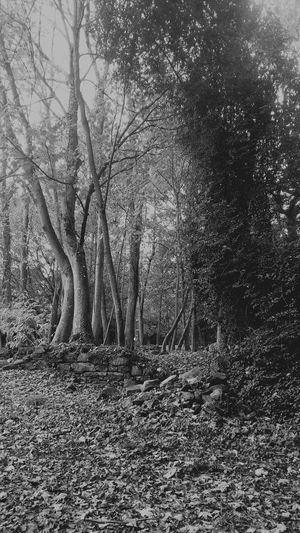 Black And White Photography Trees And Stones Autumn🍁🍁🍁 Wildlovers Oldtimes Black And White Bretagne My Love Flowers,Plants & Garden FreeSpirit ✌ Past Time And Now