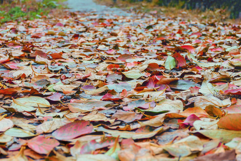Autumn weather,