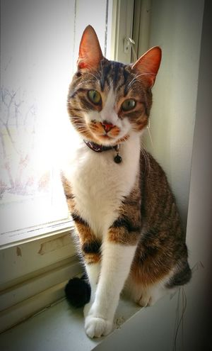 Cat by the window Pets Cats 🐱 Indoors  Window Looking At Camera Portrait One Animal Animal Photography Animalloversofinstagram Catsoftheworld Posing P9 P9photos