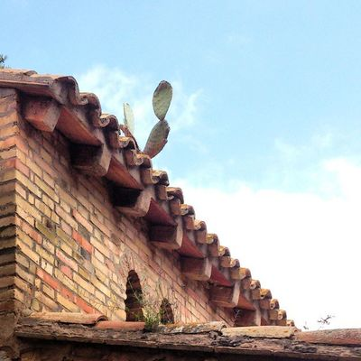 Tejado Roof Cactus Valenciagram Ig_captures_city Vivir_to2 Enfocae