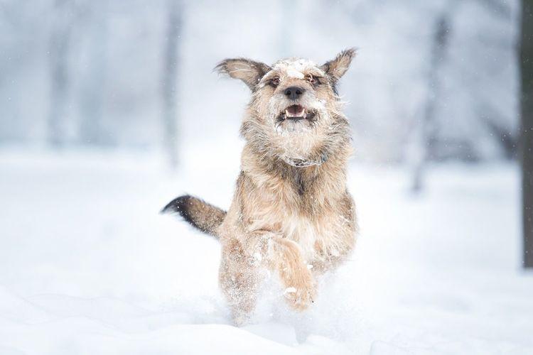 Snow One Animal Winter Animal Themes Animal Cold Temperature Mammal Canine Dog