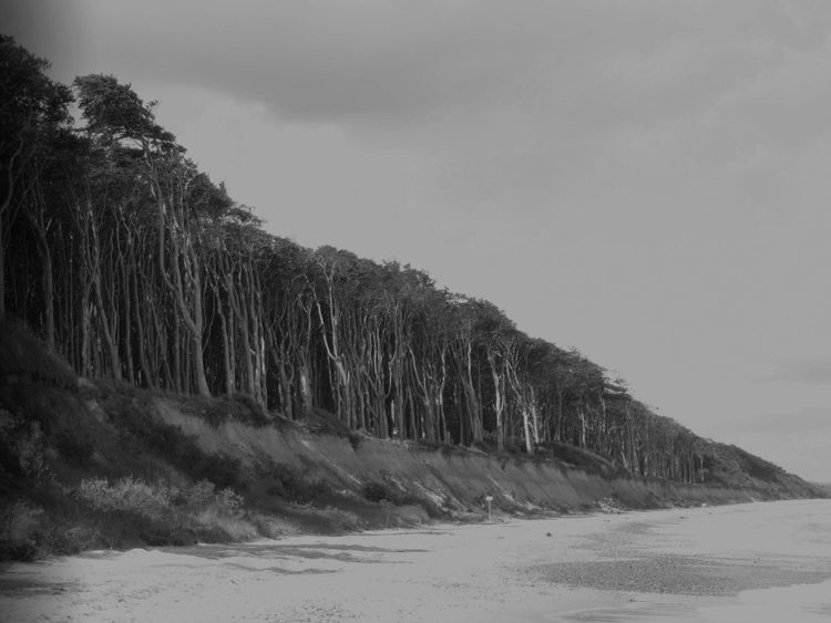 Along the Ghost forest Baltic Sea Beauty In Nature Cold Temperature Day Forest Forest Path Forest Photography Ghost Forest Landscape Nature No People Outdoors Sand Scenics Sky Snow Tranquil Scene Black And White Tree Trees Trees And Nature Trees Collection Water Winter Blackandwhite