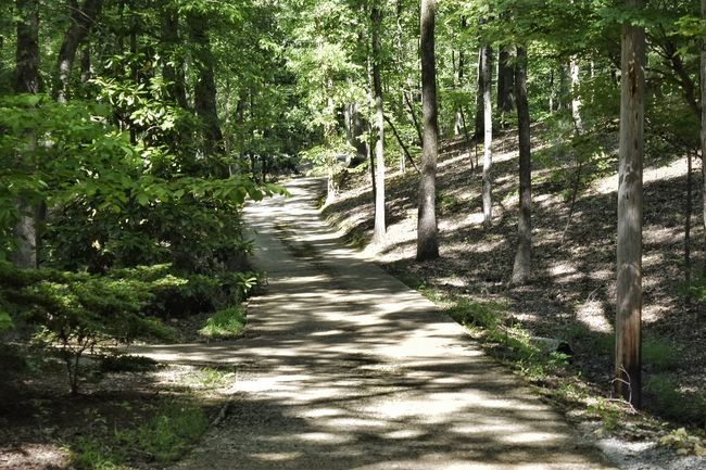 Outdoors Curved  Shadows & Lights Light Shadows Shaded Winding Road Hill Road Trees Forest