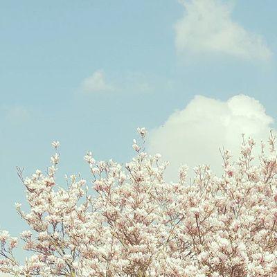 / Also jetzt bin ich wirklich froh nicht in einer knallvollen Großstadt zu leben.🏡🌾🌼 Rund um Natur ist doch was wunderbares. Vor allem um den Kopf frei zu kriegen & die ganzen Farben.😍 Miley ist auch rund um zufrieden.😄🙈 Rausandieluft Siehstdudiewunder Itsmagic Flowerpower