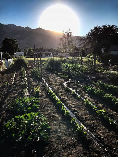 Gardening Mountains Mountain Range Mountain Gardening Garden Photography Garden Growth Tree Love Yourself