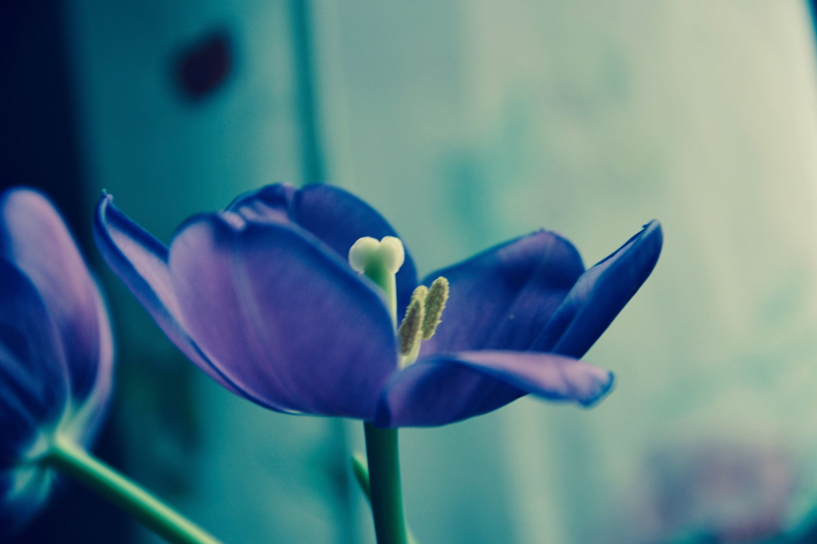 flower, fragility, freshness, nature, beauty in nature, plant, growth, flower head, petal, close-up, no people, day, indoors