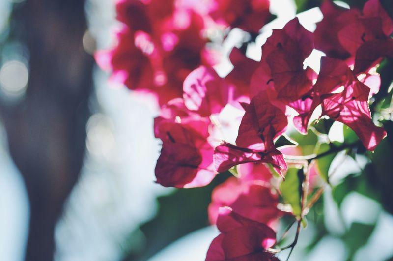 Flowers Macro #macrogardener #macrooftheday #macrophotography #macromania #papamacro