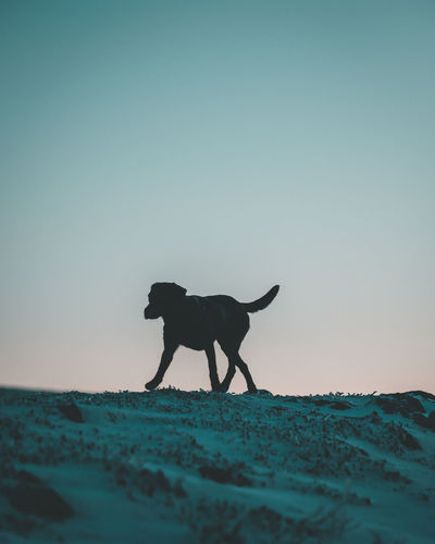 Dog walking by