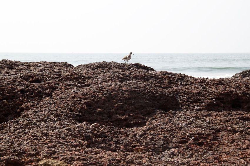 Ashvem Ashvem Beach Beach Beauty In Nature Bird Goa Horizon Over Water Nature Outdoors Rock - Object Scenics Sea Tranquil Scene Tranquility Water