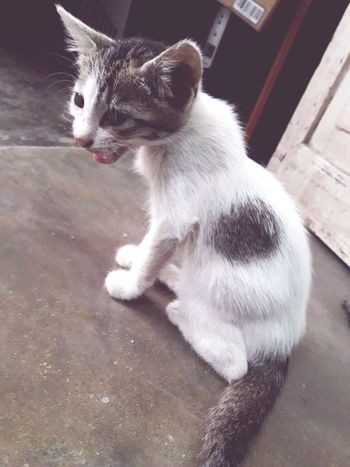 Animal Domestic Cat Pets Cute No People Sitting Day Outdoors Angrycat 😀