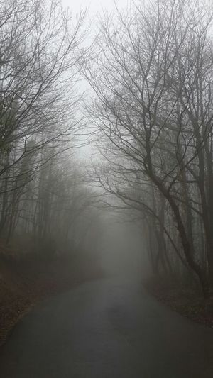 Fog The Purist (no Edit, No Filter) Landscape Eye4photography  Near And Far