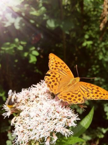 Flower Butterfly - Insect Flower Head Insect Leaf Animal Themes Close-up Plant