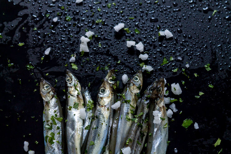 Backgrounds Capelin Close-up Cooking Fish Food Preparation Fragility Freshness Leaf Nature No People Outdoors Plant Salted Saltwater Fish Seafood Water Wet