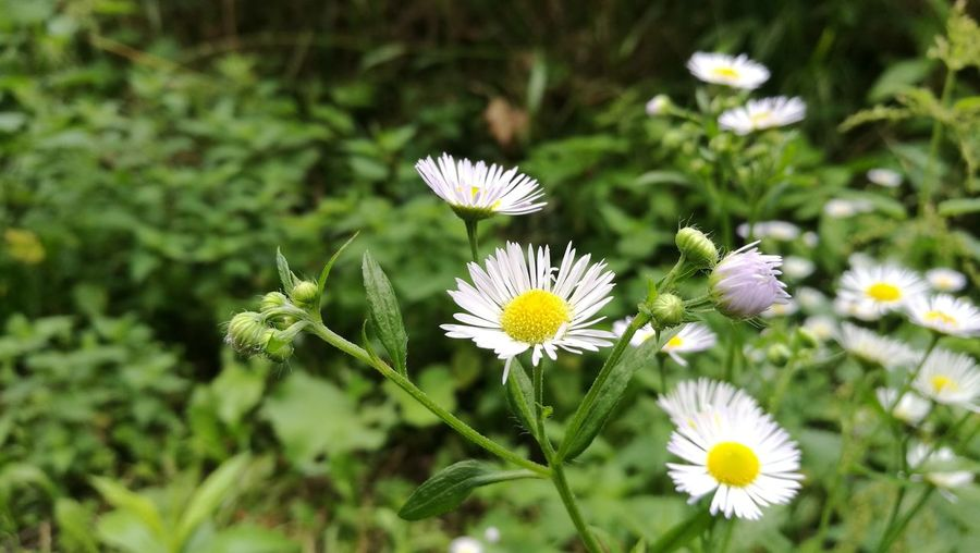 Kwiat Flower