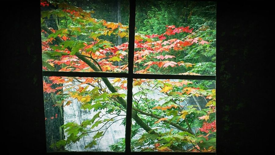 A Window Onto Fall