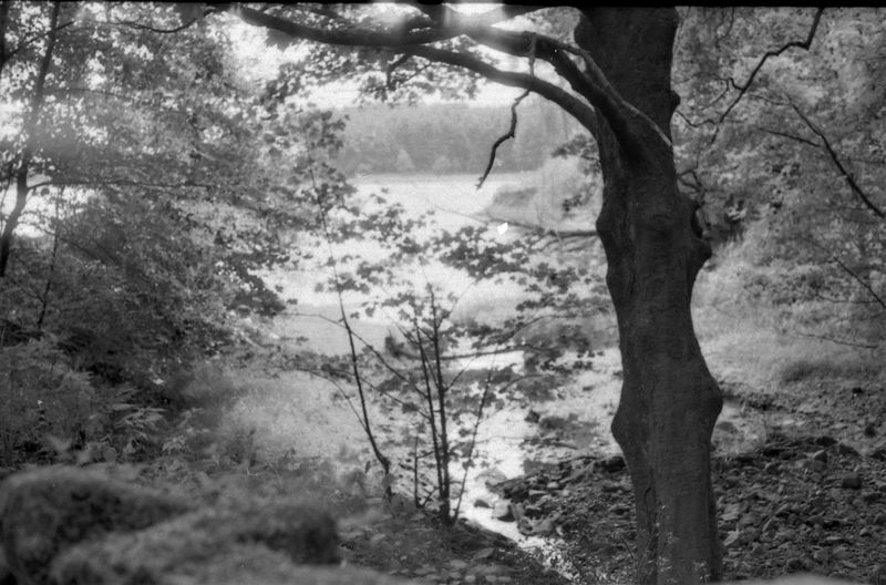 The Shore of Entwistle Reservoir from the woods Lancashire Magical WoodLand Zorki 4 Bare Tree Beauty In Nature Blackandwhite Bokeh Bolton Branch Industar69 Lake Lakeshore Landscape Nature Outdoors Reservoir Reservoir View Soviet Lenses Tree Tree Trunk Woods