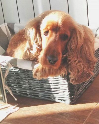 She's thoughtful.. 😂😘😊 ILY Cutie Cute Puppy Love Dog Uremine Sunlover