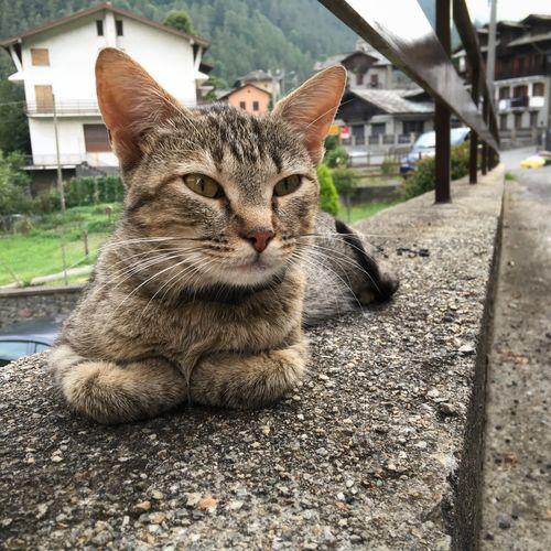 Resting cat Cat