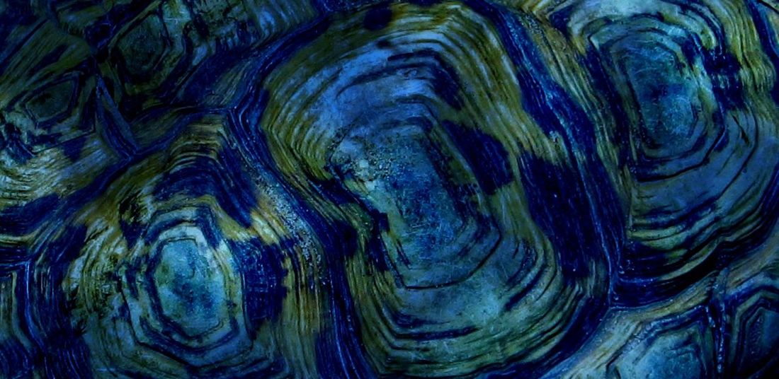 Tortoise Shell Overlay Editing EyeEmNewHere Blue Textured  Backgrounds Abstract Full Frame Rough Pattern Nature Close-up No People