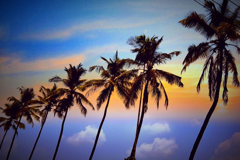 Palm Tree Tree Sky Cloud - Sky Low Angle View No People Nature Silhouette Blue Outdoors Tree Trunk Day Growth Sunset Beauty In Nature Close-up Orange Color EyeEmNewHere Reflects Sky And Clouds Skyporn Coconut Coconut Trees Coconuts Coconutwater