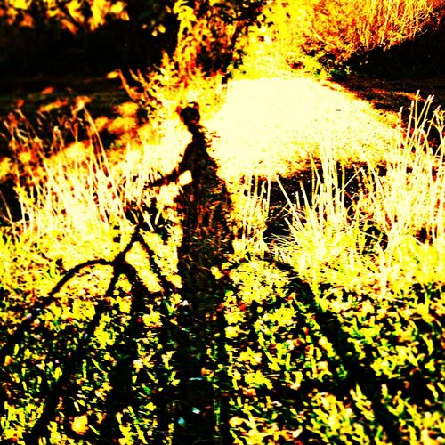 Sunlight Fall Shadow