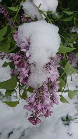 Flower Nature Plant Beauty In Nature Hello April Spring Or Winter Snowing In Spring