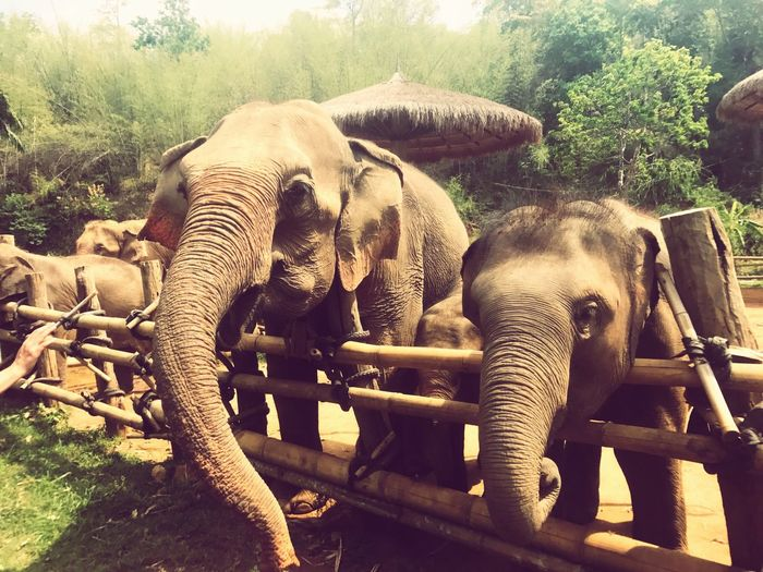 EyeEm Selects Happyelephants Outdoors GreatestMomEver Thailand HAPPIESTDAYOFMYLIFE
