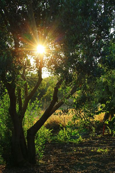 Taking Photos EyeEm Best Shots Nature Nature_collection Landscape Landscape_Collection Green Sunshine Sunset Nice Day