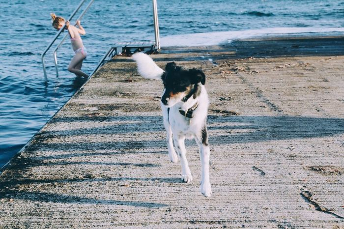 Dog Water Pets Domestic Animals Sea Day Animal Themes Outdoors Nature Mammal Full Length One Person People Pet Summer Scenics Portrait Adventure Leisure Activity Enjoyment Dog Running Archipelago One Animal Beach Summer Vacations