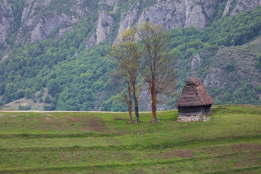Beautiful rural landscape in the Transylvanian village, Apuseni- Romania Apuseni Beautiful Grass Green Color Hills Romania Rural Trees Beauty In Nature Countryside Landscape Meadow Mountain Nature Scenics Tree Village