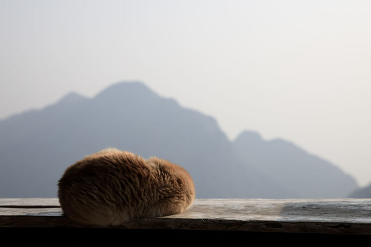 Cat sleeping winter curl up on wooden balcony and mountain background with copy space.