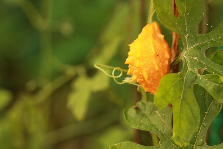 Close up orange