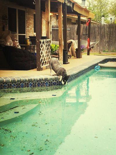 My dog likes pool water. nice lol