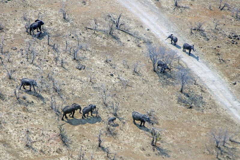 Aerial View Of Elephants On Field