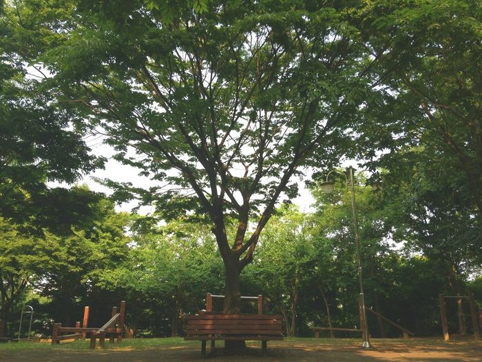 Southkorea Ansan Enjoying Life Summer EyeEm Nature Lover