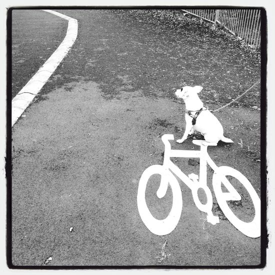 Roscoe's New Years resolution is to get out more lol! Blackandwhite A Dogs Life Streetphotography_bw
