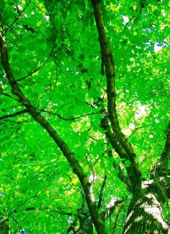 Peering through the trees as I lay on the ground daydreaming