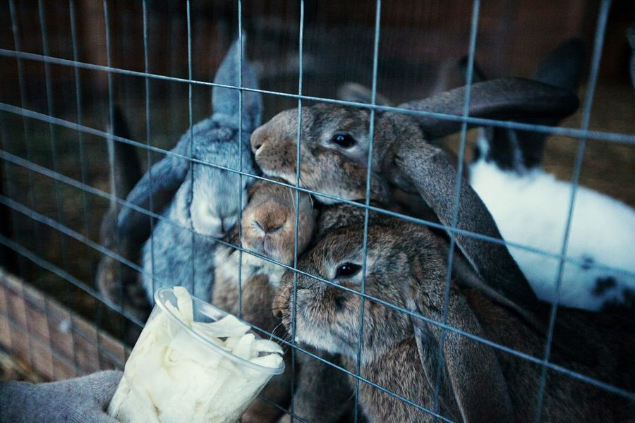 Rabbit Nature Feeding  Ecology Farm Countryside Nature_collection EyeEm Nature Lover Naturelovers Nature Photography Beautiful Nature Nature_collection