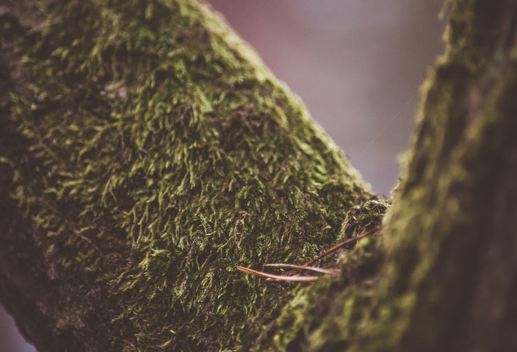 Macro Zoom Plant Growth Selective Focus Close-up Green Color Nature No People Beauty In Nature Tree Day Moss Outdoors Plant Part Tree Trunk Leaf Trunk Tranquility Green Extreme Close-up Textured  EyeEm Nature Lover Vintage Style