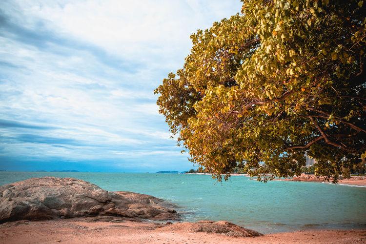 tree on coast