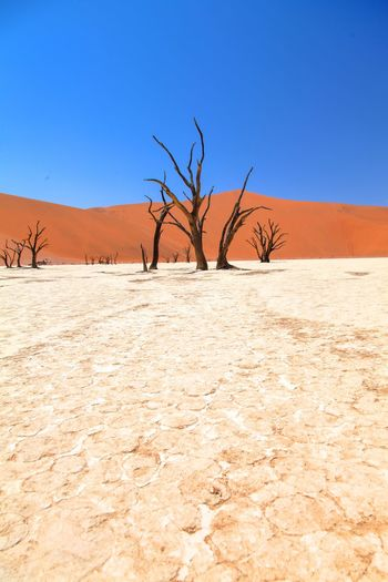 Dead Vlei in Namibia Arid Climate Bare Tree Beauty In Nature Blue Branch Clear Sky Day Desert Desert Drought Environment Landscape Namibia Nature No People Outdoors Plant Remote Sand Sand Dune Scenics Sky Soussesvlei Tree Weather