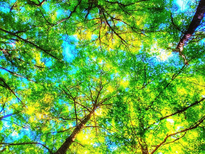 Tree Multi Colored Backgrounds Full Frame Leaf Close-up Photosynthesis Natural Pattern Plant Life Relaxed Moments Free Time