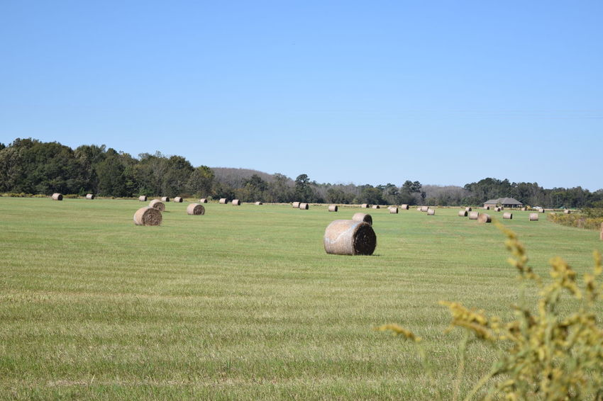 Alabama Clear Sky Field Grass Hayfield Landscape Nature Outdoors Tranquility Alabama Farms Alabama Outdoors Riding My Motorcycle