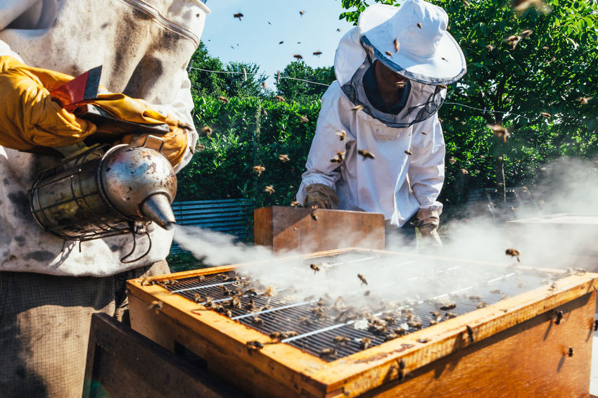 The Week On EyeEm Apiary Real People Beeswax Organic Insect Bees Food Honeycomb Honey Production Honey Bees Keeping Production Extraction Agriculture Beekeeping Honey Bee Pollen Colony Beehive Hive Healthy Beekeeper Bee Occupation