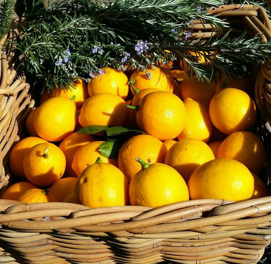 garden harvest Fruit And Herbs Rosemary Herb Healthy Eating Natural Medicine Cane Basket Tree Sour Taste Fruit Yellow Citrus Fruit Sunlight Lemon Close-up Food And Drink Juicy Vitamin C