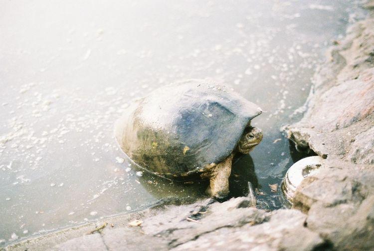 turtle Film Turtle 🐢 Turtles Agfa Agfavista400 Animal Lake Turtle Waterside