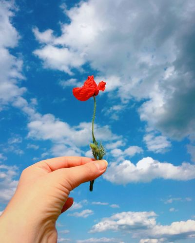 Cropped hand holding red flower against sky